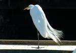Birds of Galveston - Plus (01-10&11-04)